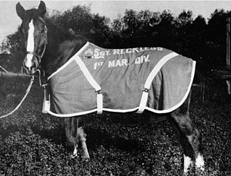 Sergeant Reckless - Staff Sergeant Reckless in retirement.