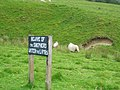 Sheep, Glencotho - geograph.org.uk - 16672.jpg