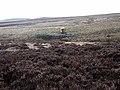 Sheepfold on Emblehope Moor - geograph.org.uk - 1185572.jpg