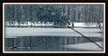 Sherman Branch Regional Park - Mallard Duck in Lake - Winter 2010 - panoramio.jpg