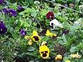 Shrubsflowers.jpg