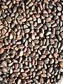 Siberian pine nuts-1.jpg