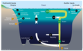 Silicon cycle and balance in the modern world ocean.png
