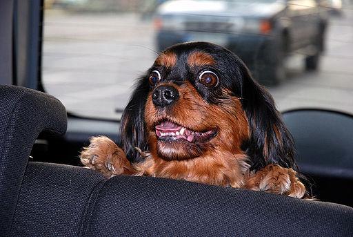 Silly Dog (2277051513)