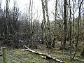 Silver Birch Woods and Ponds - geograph.org.uk - 1222987.jpg