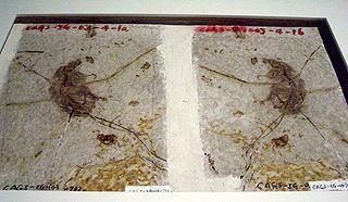 <i>Sinodelphys</i> Extinct family of mammals