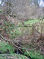 Small Stream - geograph.org.uk - 346496.jpg