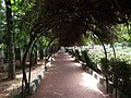 Snap from Lalbagh Flower Show Aug 2013 8807.JPG