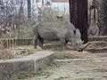 Sofia Zoo - Rhino 001.jpg