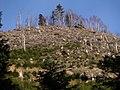 Sommet et pente ouest du Petit Donon en 2006.jpg