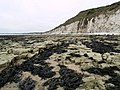South Flamborough Beach - geograph.org.uk - 424133.jpg