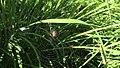 Spider web (8476328472).jpg