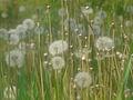 Spring - 5 (2009). (12945804703).jpg