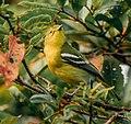 Sri lankan typical bird.jpg