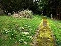 St Mary's churchyard, Bepton - geograph.org.uk - 736292.jpg