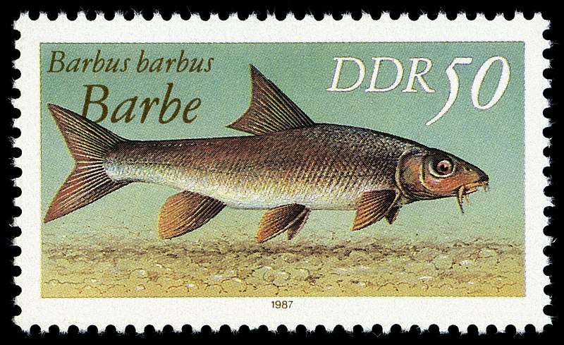 Файл:Stamps of Germany (DDR) 1987, MiNr 3099 I.jpg