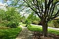 Stanley M. Rowe Arboretum - DSC03501.JPG