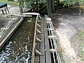 Staverdense molen2.jpg