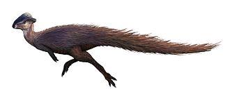 1902 in paleontology - Image: Stegoceras validum