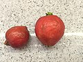Strawberry Guava 01.jpg