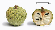 Sugar apple with cross section.jpg