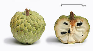 Sugar-apple - Sugar-apple with cross section