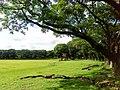 Sunken Garden, U.P. Diliman, Quezon City (1).jpg