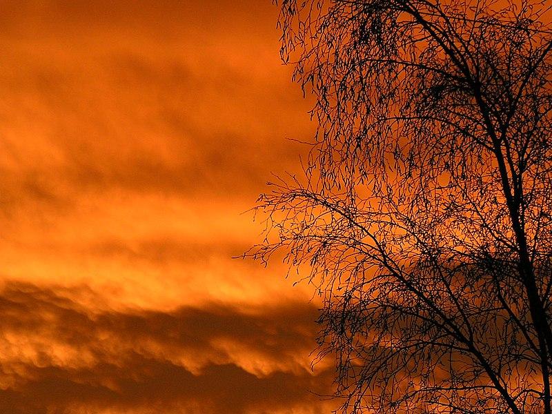 Feuillage de bouleau au coucher de soleil, Eaunes, France