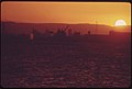 Sunset over the Harbor at Vancouver, Head of Deep-Water Navigation on the Columbia River 05-1973 (4271613401).jpg