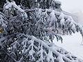 Superbagneres neige dans les arbres - 2016a.jpg
