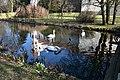 Swans at Telc (7) (25809005013).jpg