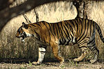 Ranthambhore-Nationalpark