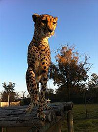 Lion Park - Wikipedia