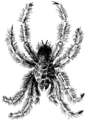Tarantula 2 (PSF).png