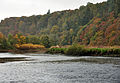 Tavy Estuary and Whittacliffe Wood 1.jpg