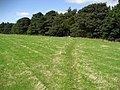 Teesdale Way approaching Towlerhill Plantation - geograph.org.uk - 1513433.jpg