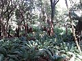 Telegraph Saddle to Sealers Cove Track, Wilsons Promontory National Park 08.jpg