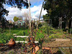 Longfellow, Oakland, California - Temescal Community Garden