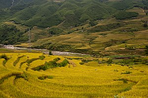 Terraced fields Sa Pa 2.jpg