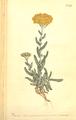 The Botanical Magazine, Plate 498 (Volume 14, 1800).png