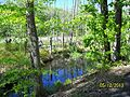 The Lawrence Brook, Monmouth Junction, New Jersey USA May 2013 - panoramio (7).jpg