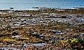 The Loughshore near Greyabbey - geograph.org.uk - 2198752.jpg