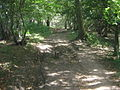 The North Downs Way near Soakham Downs - geograph.org.uk - 1456229.jpg
