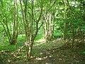 The Wild Wood - geograph.org.uk - 826686.jpg