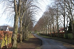 The avenue of trees leading to Corstorphine Hill Cemetery.JPG