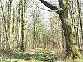 The path towards Bryntirion through Coed Twr - geograph.org.uk - 366306.jpg