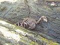 The perils of rock climbing - geograph.org.uk - 644712.jpg