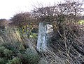 The trig point at Bowsden West Farm - geograph.org.uk - 301590.jpg