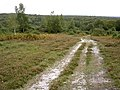 The view south from Acres Down, New Forest - geograph.org.uk - 57394.jpg