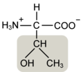 Threonine w functional group highlighted.png
